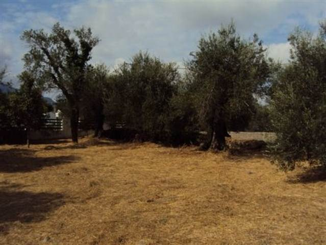 rr1443-roula-rouva-corfu-real-estate