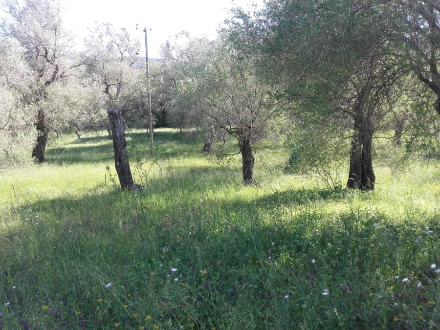 rr2866-roula-rouva-corfu-real-estate