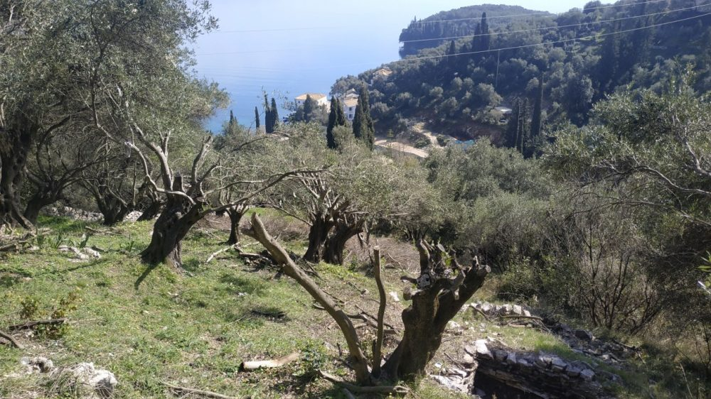 img-20210225-134708-roula-rouva-corfu-real-estate