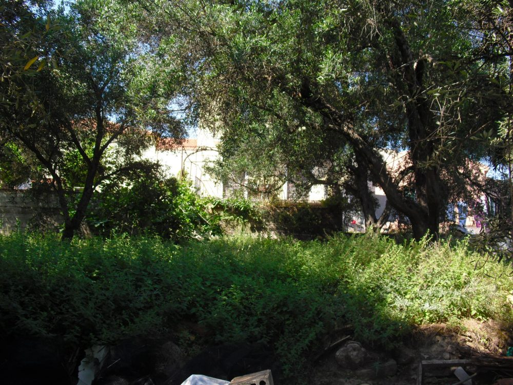 rrl1641-behind-the-house-3-roula-rouva-corfu-real-estate
