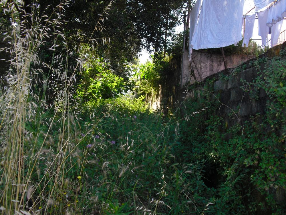 rrl1641-behind-the-house-roula-rouva-corfu-real-estate